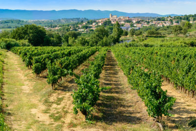 Weinberge Beziers Herault France